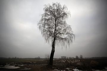ciemne drzewo na tle nieba