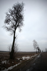 ciemne drzewa na tle nieba