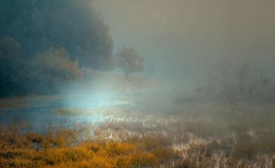 Obraz Mokradło - fototapety do salonu