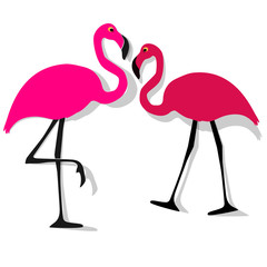Two Flamingos couple pink on a white background.