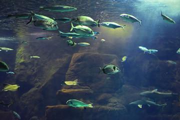 Big Madeira's aquarium.