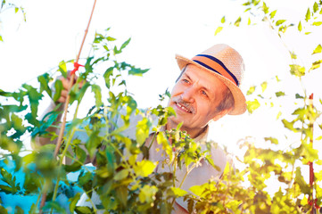 Happy senior gardener working in his home garden