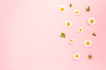 Chamomile flowers and green leaves on pink background. Flat lay, top view