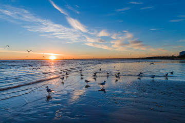Gulls in shallow water at sunset
