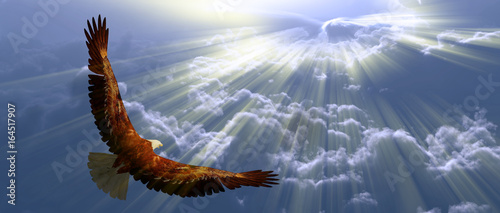 Wall mural Eagle in flight above tyhe clouds