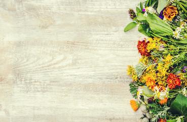 Herbs. Medicinal plants. Selective focus.