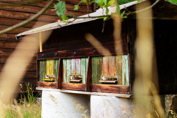 Cute vintage wooden apiary with beehives
