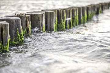 Mit Algen bewachsene Bune in der Ostsee