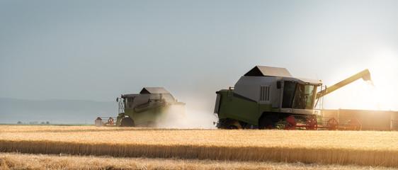 Harvesting of wheat fields in summer