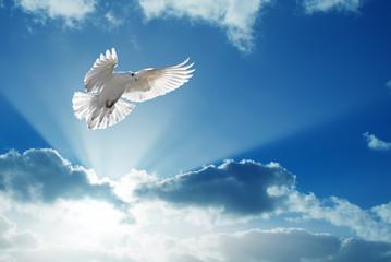 Holy Spirit dove flies in blue sky Wall mural