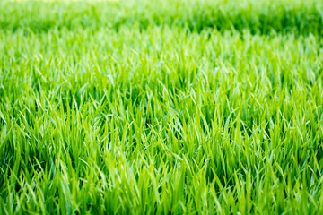 Close-up on blades of grass with defocused background