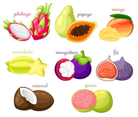 Exotic fruits vector set Juicy and ripe fruit papaya guava mango pitahaya mangosteen fig coconut carambola cartoon organic Isolated vector illustration on white background Web site page and mobile app