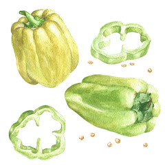 Watercolor hand drawn peppers, two capsicums, green and yellow, food illustration isolated on white background.