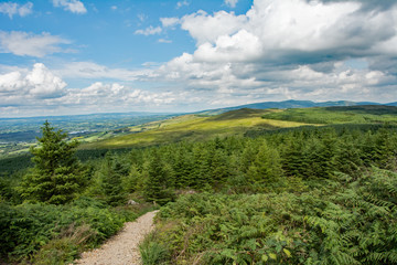 Poster Hill Path in Irish hills with mountains in background