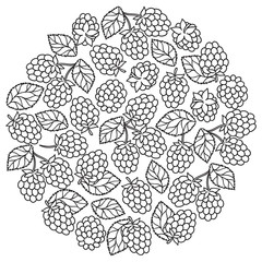raspberry blackberry with leaves  pettern for coloring book