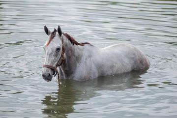 Bathing horse
