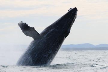 Wale Watching