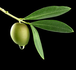 olive dripping oil