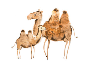 Handmade illustration of camel mother and calf