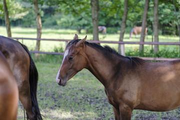 Pferdeweiden in Niedersachsen