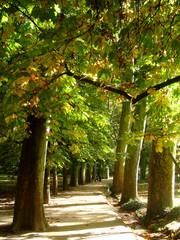 El camino del otoño... las hojas coloradas..