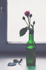 Rose in a green bottle on rusty wooden window