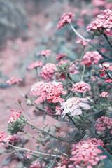 Цветы на размытом фоне.