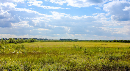 Летний пейзаж в поле
