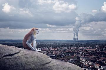 Einsame Affe sitzt über die Stadt Wall mural