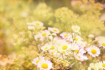 Картинка с полевыми цветами и жуком.