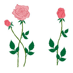 Pink rose and buds in the style of flat