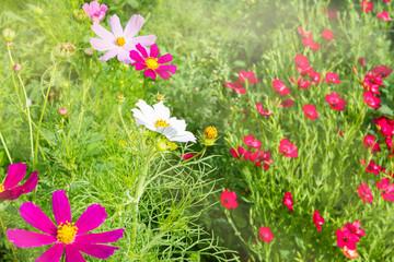 Летние цветы на размытом заднем фоне.