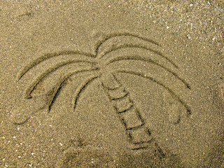 palm  painted on beach sand