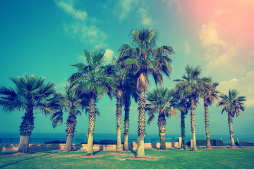 Embankment with palm trees in Netanya city, Israel