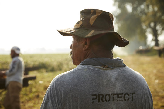 Rear view of migrant worker harvesting tobacco in field