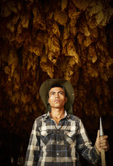 Portrait of Mexican migrant worker, harvesting tobacco in Kentucky.