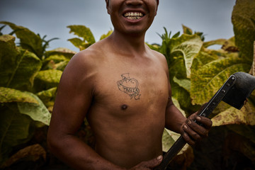 Laughing portrait of Mexican migrant worker, harvesting tobacco in Kentucky.