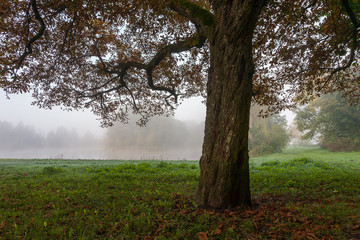 Fototapete - Landscape park in misty morning