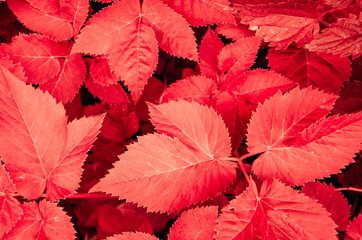 Fototapete - Focused red leaf in forest. Nature exotic illustration