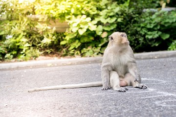 Monkey on the road in the city along the way with trees background.  Using for wallpaper or animal work foto .