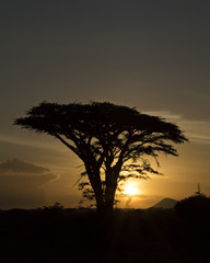 Tanzania Sunset 6