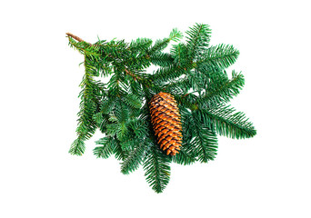 Fir branch with cone on a white background