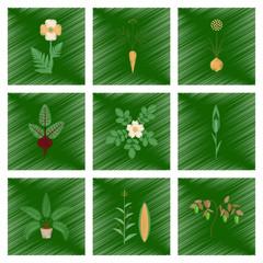 assembly flat shading style illustration papaver daucus carota allium beta rosa majalis phoenix zea mays pepper
