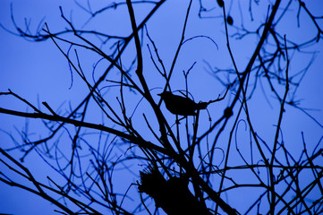 Silhouette Bird On Tree Over Cloudy Blue Sky Background