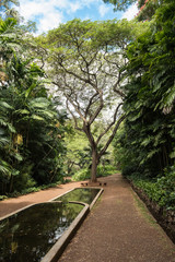 Tropical garden pond and tree