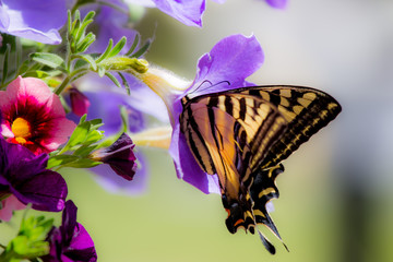 Monarch butterfly on flower.