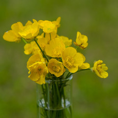 Bouquet of flowering meadow flowers in a vase
