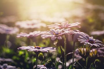 Fototapete - Beautiful flower in the morning