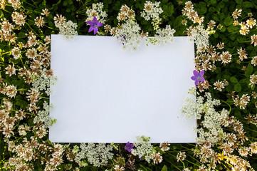 Frame or mockup of fresh clover leaves