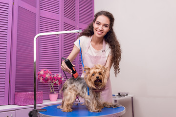 professional young groomer trimming yorkshire terrier dog with trimmer and smiling at camera